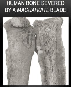 Human Bone Severed by a Macuahuitl Blade